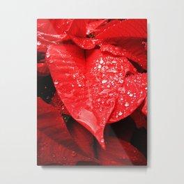Poinsettia Metal Print