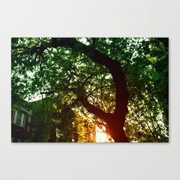 Last summer Canvas Print