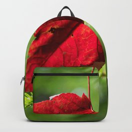 Red Leaf Macro // High Resolution Photograph in the Evergreen Trees Backpack