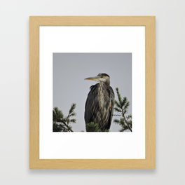 Tree Top Heron at Dawson Creek Park Framed Art Print