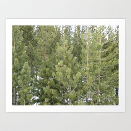 Lost in the forest Art Print