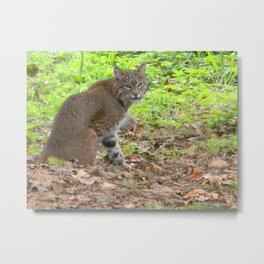 """""""Profile of a Bobcat in the Wild. """"  By Doz.   (2 of 3) Nature Series #3. Metal Print"""