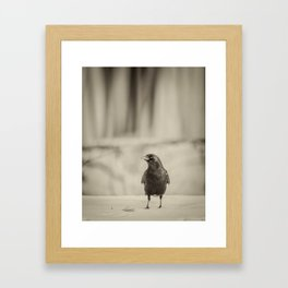 Betsy's Crow In The Snow Framed Art Print