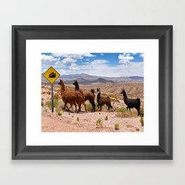 Downhill Llamas Framed Art Print