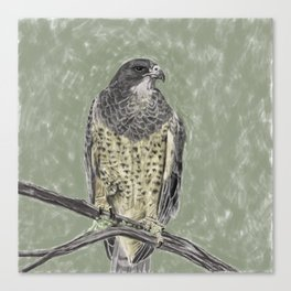 Black-chested buzzard-eagle (Geranoaetus melanoleucus) Canvas Print