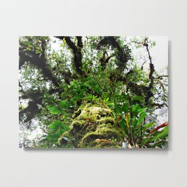 epiphyte tree in a cloud forest Metal Print