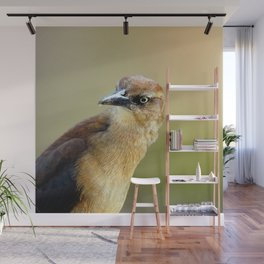Female Great-tailed Grackle Wall Mural