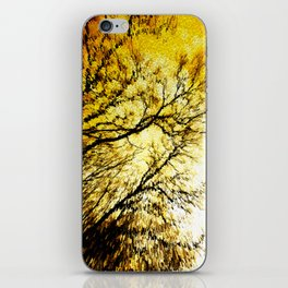 Morning Tree Tops iPhone Skin