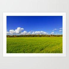 Rice Field II Art Print