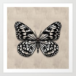 Tree Nymph Butterfly Art Print