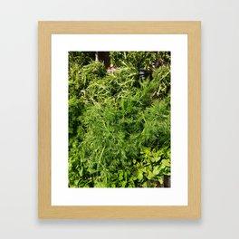 Green Vegetable Herbs Framed Art Print