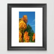 Spots of Orange Framed Art Print