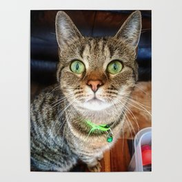 Green Eyed Meow Poster