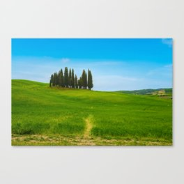 Beautiful spring minimalistic landscape with Italian Cypress on the green hills in Tuscany countrysi Canvas Print