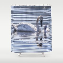 Cygnet with Mother Shower Curtain
