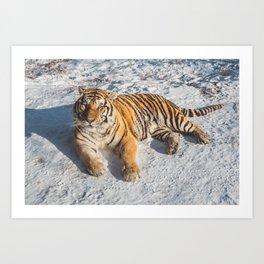 Tiger at its best Art Print