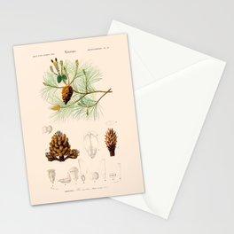 Vintage Pine Stationery Cards