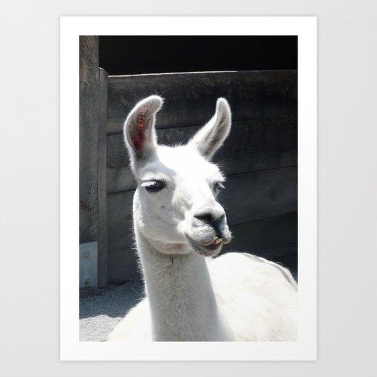 Llama Tell Ya... Art Print