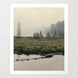 trees in the morning mist Art Print