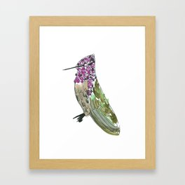 Hummingbird Cassius Framed Art Print