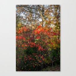 Autumn Colors Along the Natchez Trace Canvas Print