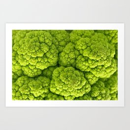 Green Cauliflower Macro Art Print