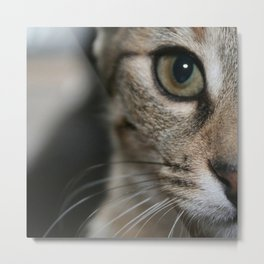 Eye of a Tiger... Metal Print