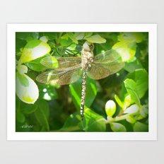 Stainglass Dragonfly Art Print