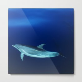 Dolphin and blues Metal Print