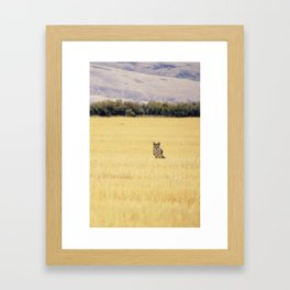 Canidae Framed Art Print