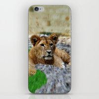 the lion king iPhone & iPod Skins featuring King Lion by helsch photography