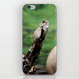 Gaboon Viper iPhone Skin