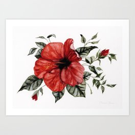 Blooming Red Hibiscus Art Print
