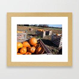 Crate of Pumpkins Framed Art Print