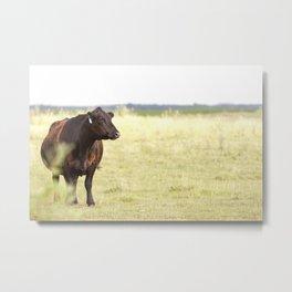 Black Angus Cow Metal Print