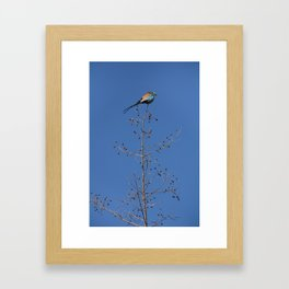 Bird in Benin Framed Art Print
