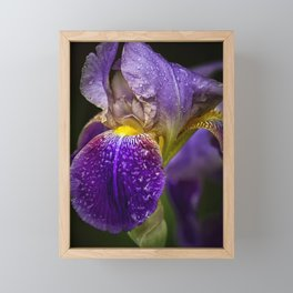 Bearded Iris Framed Mini Art Print