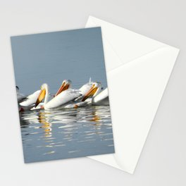 Conga Line of American Pelicans Stationery Cards