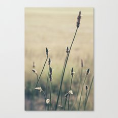 Afternoon Adventures Canvas Print