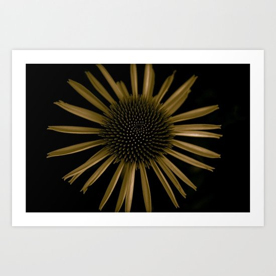 a flower in the dark number two  Art Print