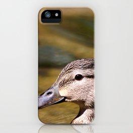 Mallard Portrait iPhone Case