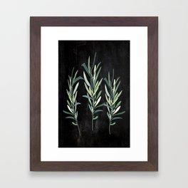 Eucalyptus Branches On Chalkboard Framed Art Print