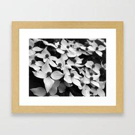 Kousa Dogwood Framed Art Print