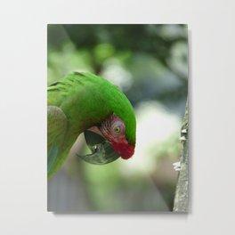 parrot 2015 II Metal Print
