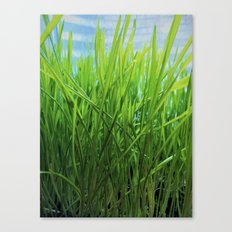 Wheat Grass in Motion Canvas Print