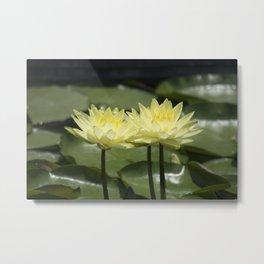 Longwood Gardens - Spring Series 294 Metal Print