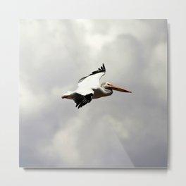 Watercolor Bird, American White Pelican 03, Willow Creek, Granby, Colorado Metal Print