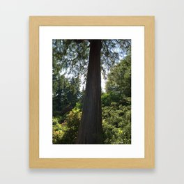 Tree silhouette - Kubota Garden - Seattle Framed Art Print