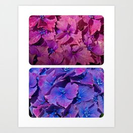 Pink and Purple Flowers Art Print