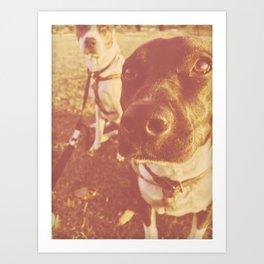 Blue Heeler Dogs At Sunset Art Print